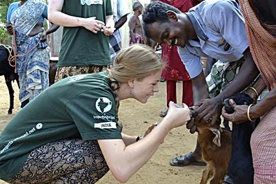 frivilligt arbejde med dyr