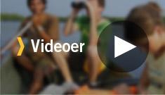 Videoer