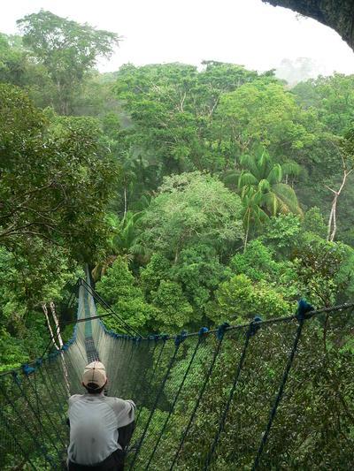 En frivillig i Sydamerika tager sig et hvil i regnskoven i Peru