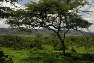 Smuk natur i Kenya