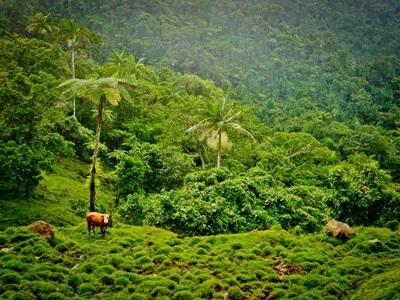 Det frodige landskab i Samoa