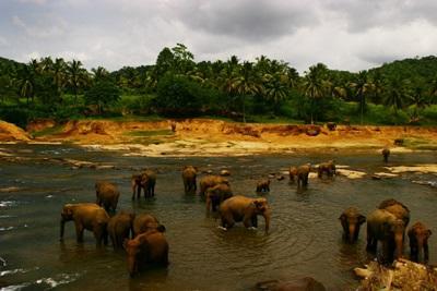 Frivilligt arbejde Sri Lanka