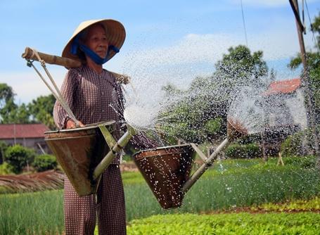 Vietnamesisk kvinde vander sin have