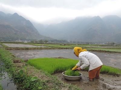 Smukke rismarker i Vietnam