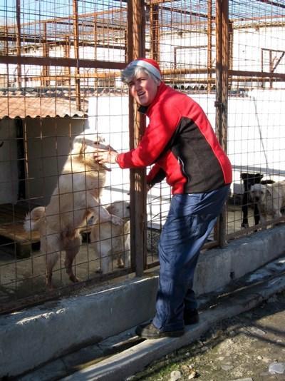 Arbejd på herberg for herreløse hunde i Rumænien