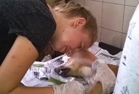 Frivilligt arbejde i Dyrepasning