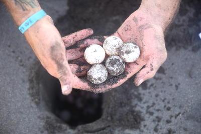 Grupperejse for 19+ år på skildpaddeprojekt i Mexico