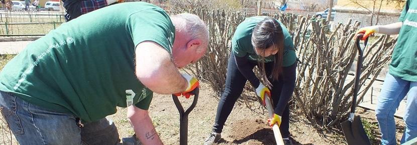 En gruppe frivillige graver huller for at plante træer i Mongoliet