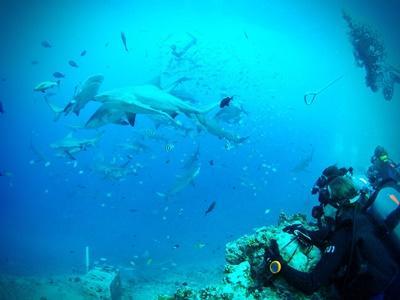 Frivillige på hajdyk I Fiji