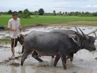 Frivillig på Khmer-projektet i Cambodja