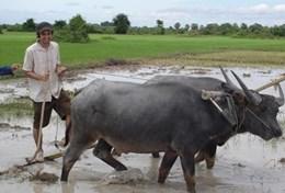 Volunteer Cambodja