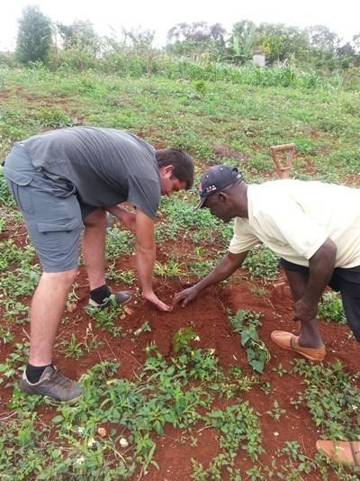 Frivillig på landbrugsprojektet i Jamaica