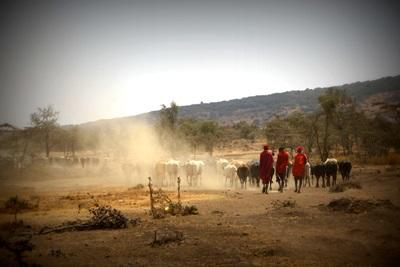 Maasai-projektet i Tanzania