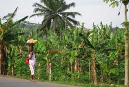Frivilligt arbejde i Mikrofinans