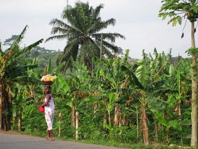 Arbejd med mikrofinans i Ghana