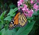 List of Butterflies
