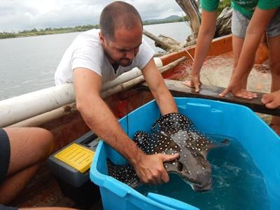 Der bliver tagget hajer i Fiji