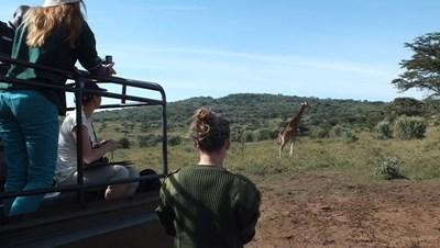 Frivillige på safari i Kenya