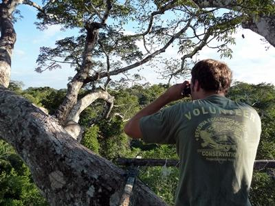 Frivillig på naturbevaringsprojekt i Perus regnskov