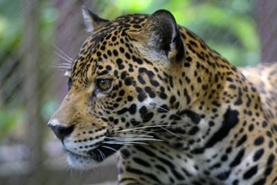 Natur og miljøprojektet i Perus regnskov