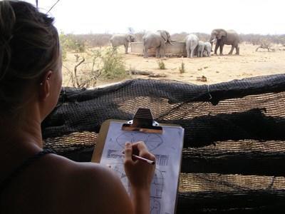 Frivillig researcher elefanter i Botswana