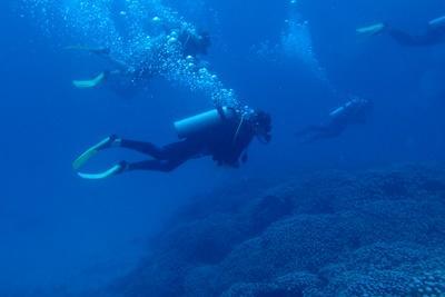 Ungdomsprojekt med naturbevaring i Fiji