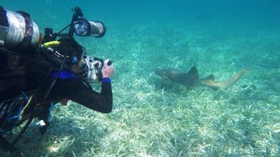 Grupperejse med naturbevaring i Belize