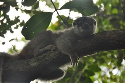 Naturprojekt i Madagaskar