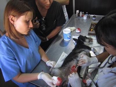 Frivillig på veterinærprojekt i Argentina