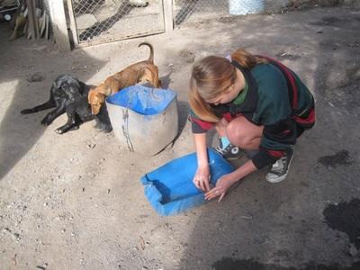Frivillig på veterinærprojekt med herreløse hunde i Argentina