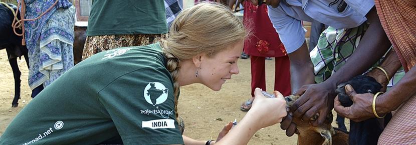 Frivillig på veterinærmedicin i Indien
