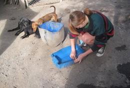 Volunteer Veterinærmedicin & <br /> Dyrepasning