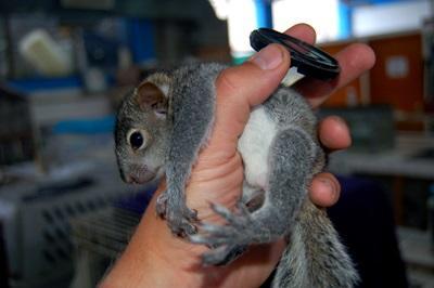 Arbejd med forskellige slags dyr på veterinær-projektet