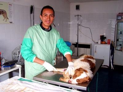 Frivillig på veterinær-projekt i Rumænien